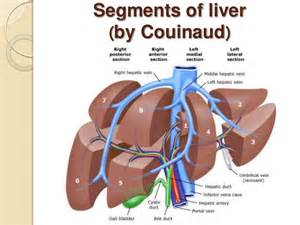 couinaud's liver picture 5