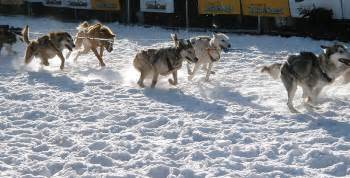 dogs intestinalviruses picture 6