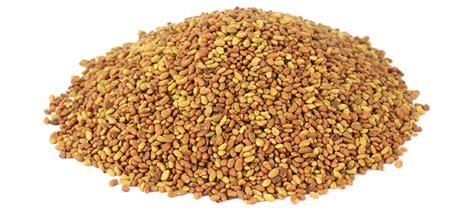 alfalfa seed companys picture 17