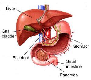 flukes in bladder picture 3