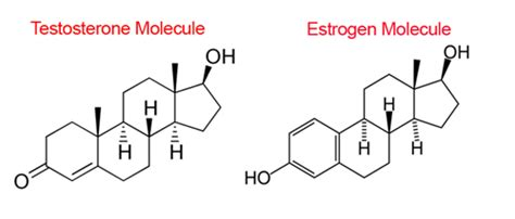 testosterone and estrogen balance picture 13