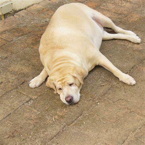 canine diet pancreais picture 11