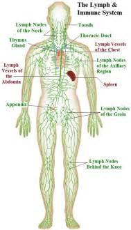 autoimmune thyroiditis disease axillary lymphocytic lymph nodes picture 1