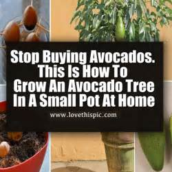 stop grow prices picture 6