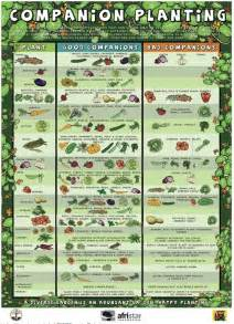 herbals that can be use for to do picture 10
