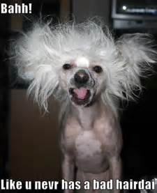 bad hair day picture 10