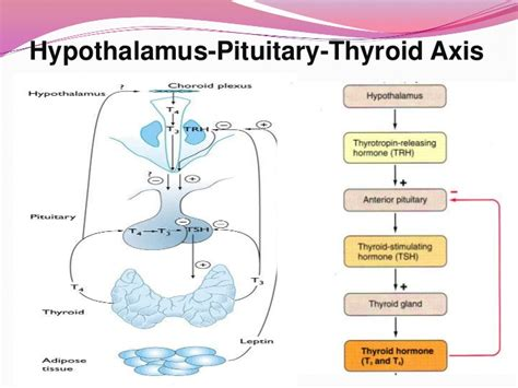 colloid cyst in thyroid picture 11