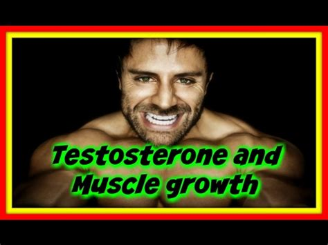 testosterone levels needed for muscle growth picture 2