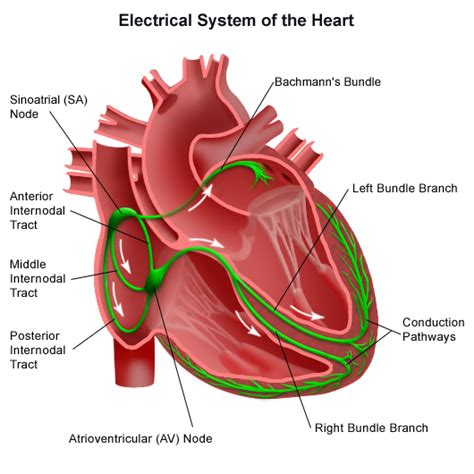 Causes of sudden drop in blood pressure picture 9