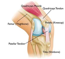 knee joint bone spurs growth time picture 6