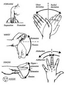 joint movements anatomy picture 3