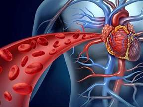 increase blood flow to male picture 13