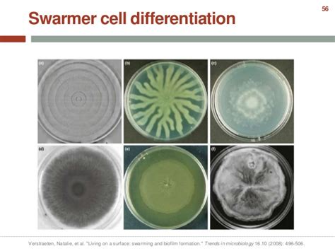 microbial differentiation picture 9