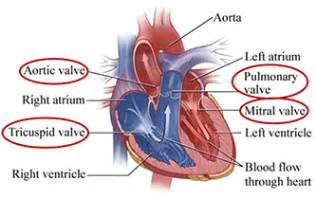erectile dysfunction and aortic heart valve picture 18