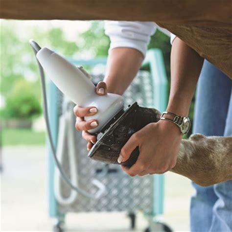 equine pain relief therapy picture 1