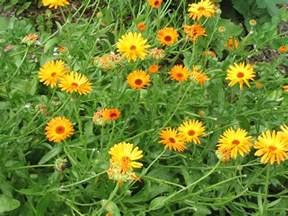herbal medicine blog picture 2