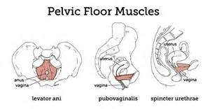 acupressure for pelvic muscle spasms picture 18