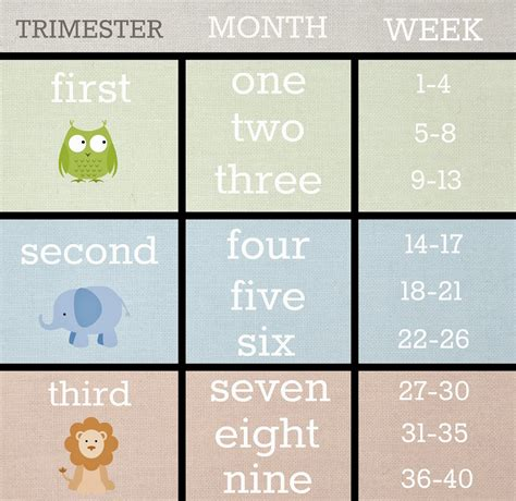 weight loss in second trimester picture 10