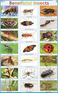 insect story in hindi picture 3