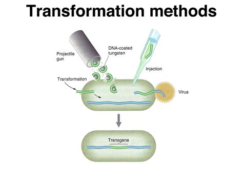 bacterial transformation cohan method picture 1