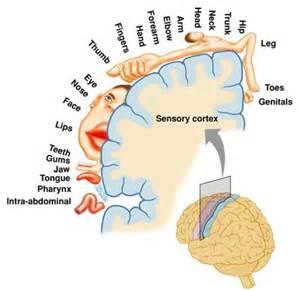 facet joint pain picture 7