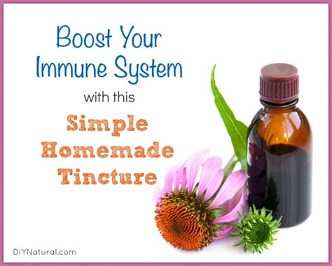what herbal suppement help boost the immune system picture 6