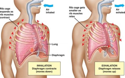 the effect of exercise on liver function picture 4