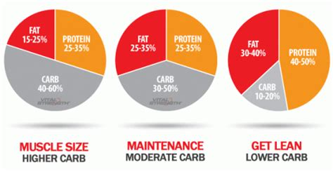 increase lean body m nutrition picture 2