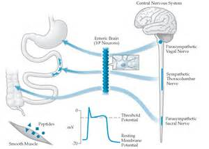 colon nerve problems picture 10