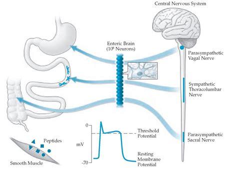 colon nerve problems picture 9