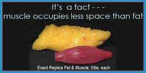 fat weight compared to muscle picture 9