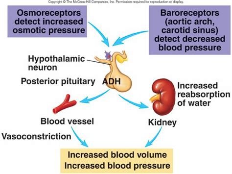 Blood pressure and water picture 5