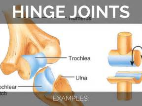 hinge joint picture 9