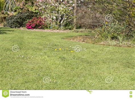 dandelion allergy picture 10