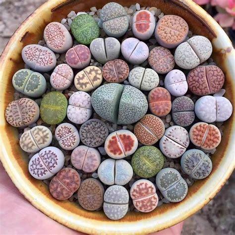 cactus picture 7