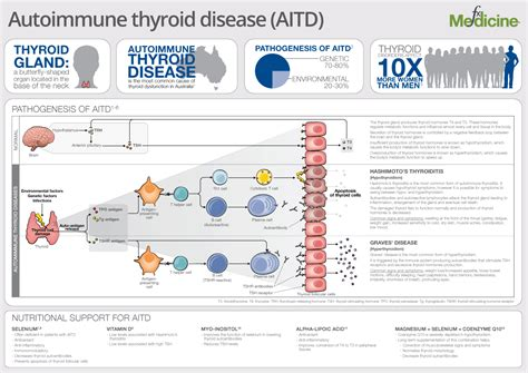 ana and autoimmune thyroid disease picture 3