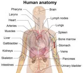where is the liver located in the body picture 9