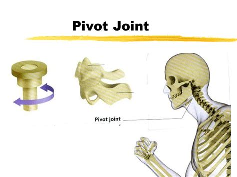 what is a pivot joint picture 1