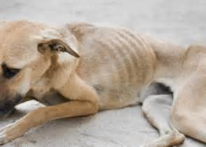 causes of canine loss of appetite picture 11