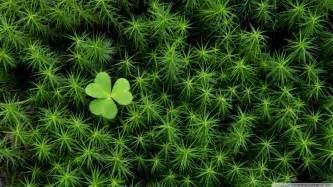 irish and scotch moss picture 14