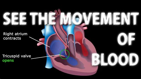 Blood flow animation picture 1