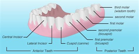 benefits of teeth cleaning picture 11