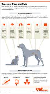 types of canine liver cancer picture 2