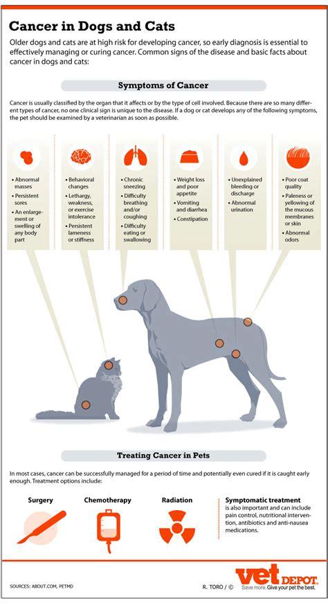 feline skin lesions picture 18