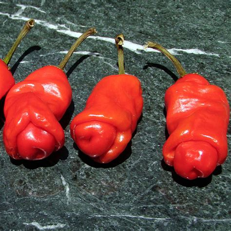 will cayenne pepper hurt penis picture 6