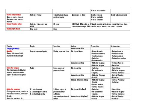 agonist and antagonist muscles list picture 7