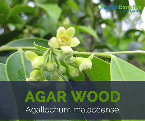 agar health benefits picture 2