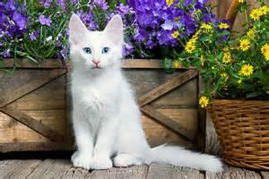 persian cat skin diseases picture 7