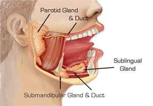 gland picture 5
