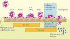 bacterial iinfection in the blood picture 1
